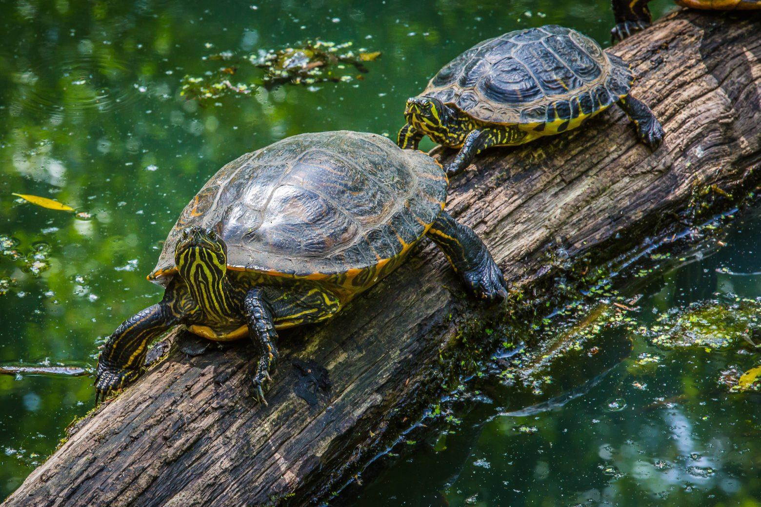 turtle-2339949