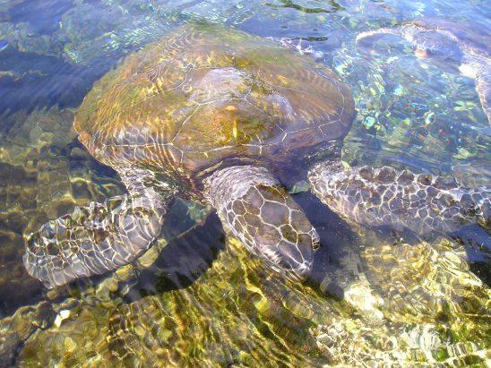turtle-54