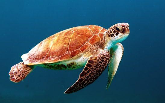 turtle-863336