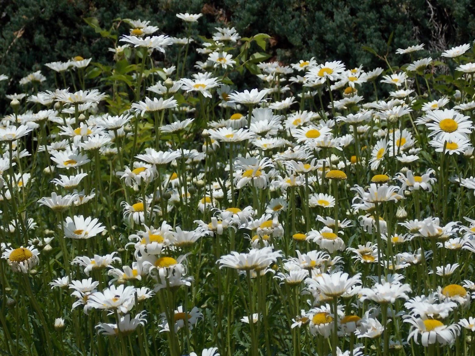 Clark Gardens 4-26-2014 007