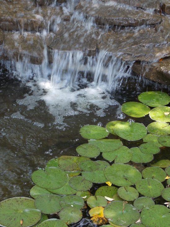 Clark Gardens 4-26-2014 015