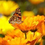 butterfly-196745