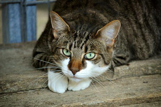 cats-eyes-2671903