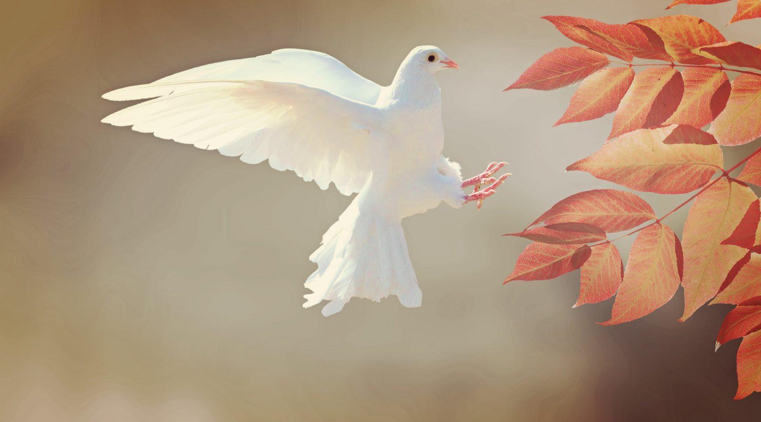 dove-2516641