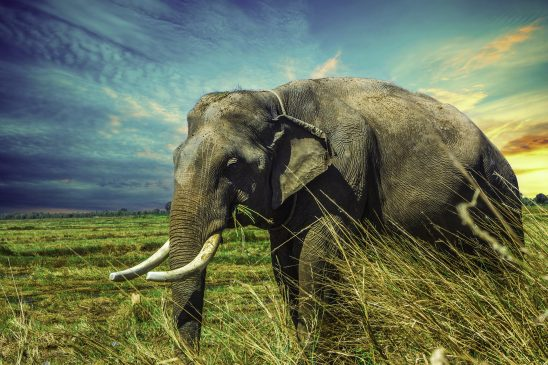 elephant-2729415