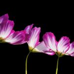 flowers-2708995