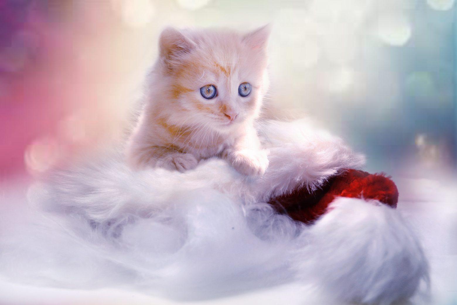 kitten-1856134
