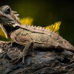 lizard-2427248