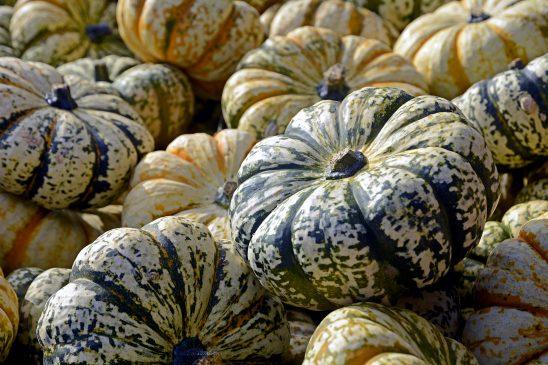 pumpkin-2738617