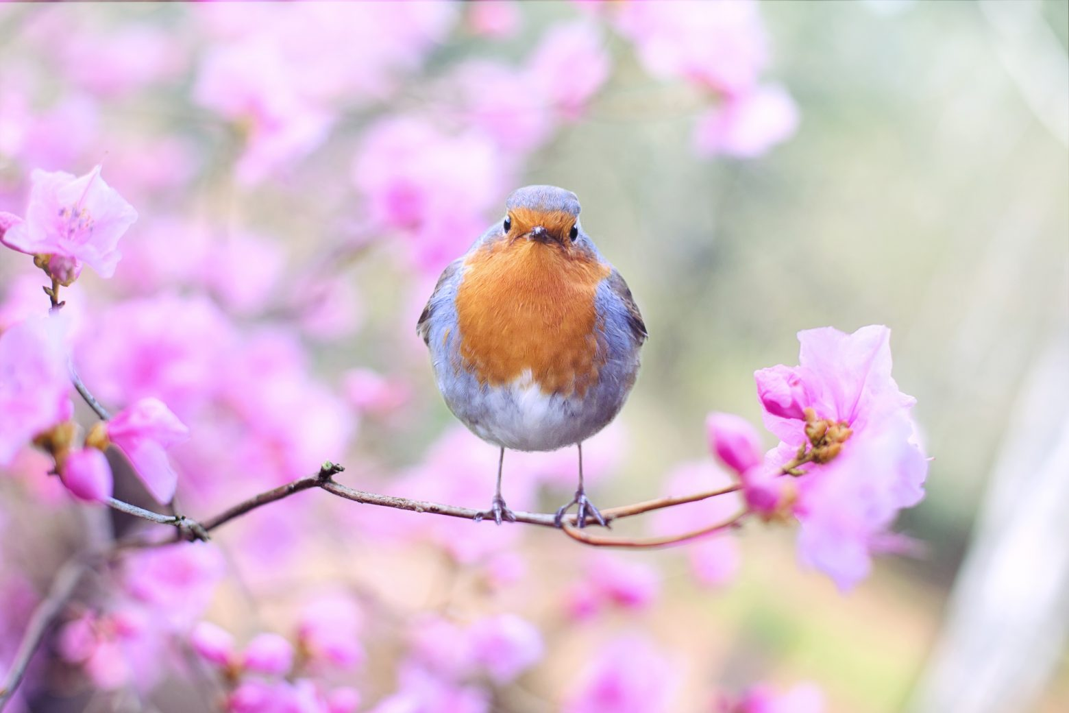 spring-bird-2295436