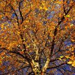 tree-1862633
