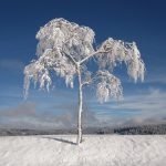 winter-1675197