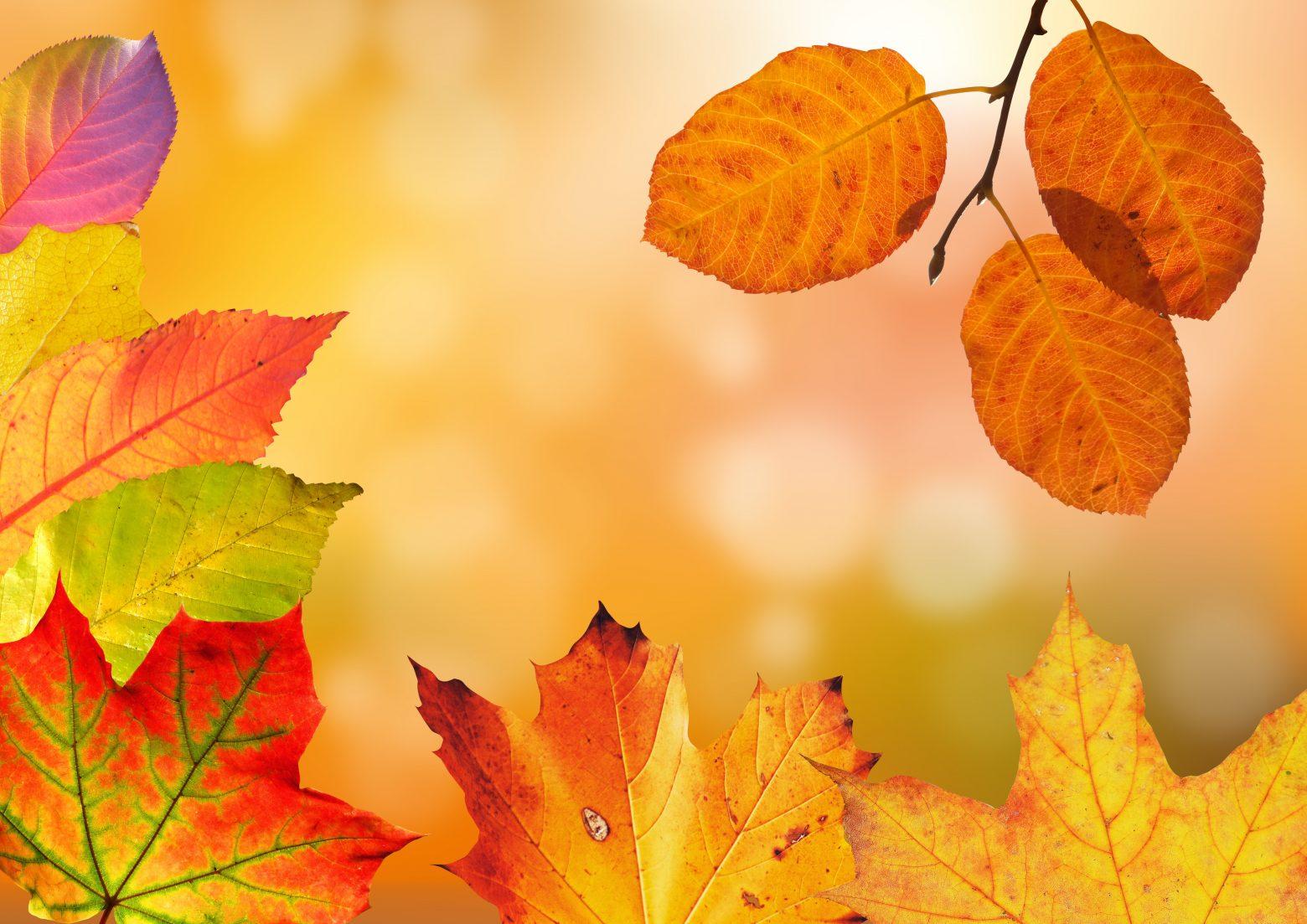 autumn-1649362