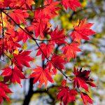 autumn-2789234