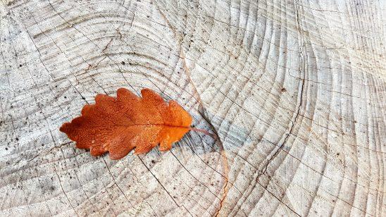 autumn-2815427