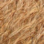 cereals-2943986