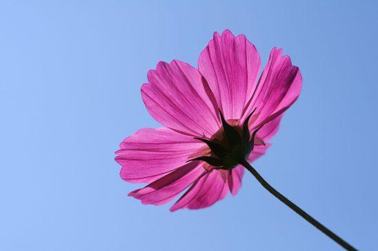 flower-1219360