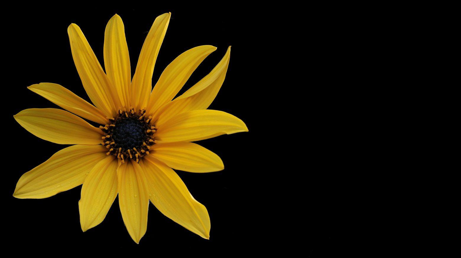 flower-2797108
