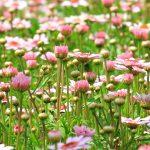 flower-meadow-1510602