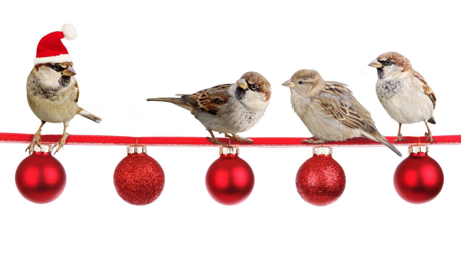 sparrows-2900850