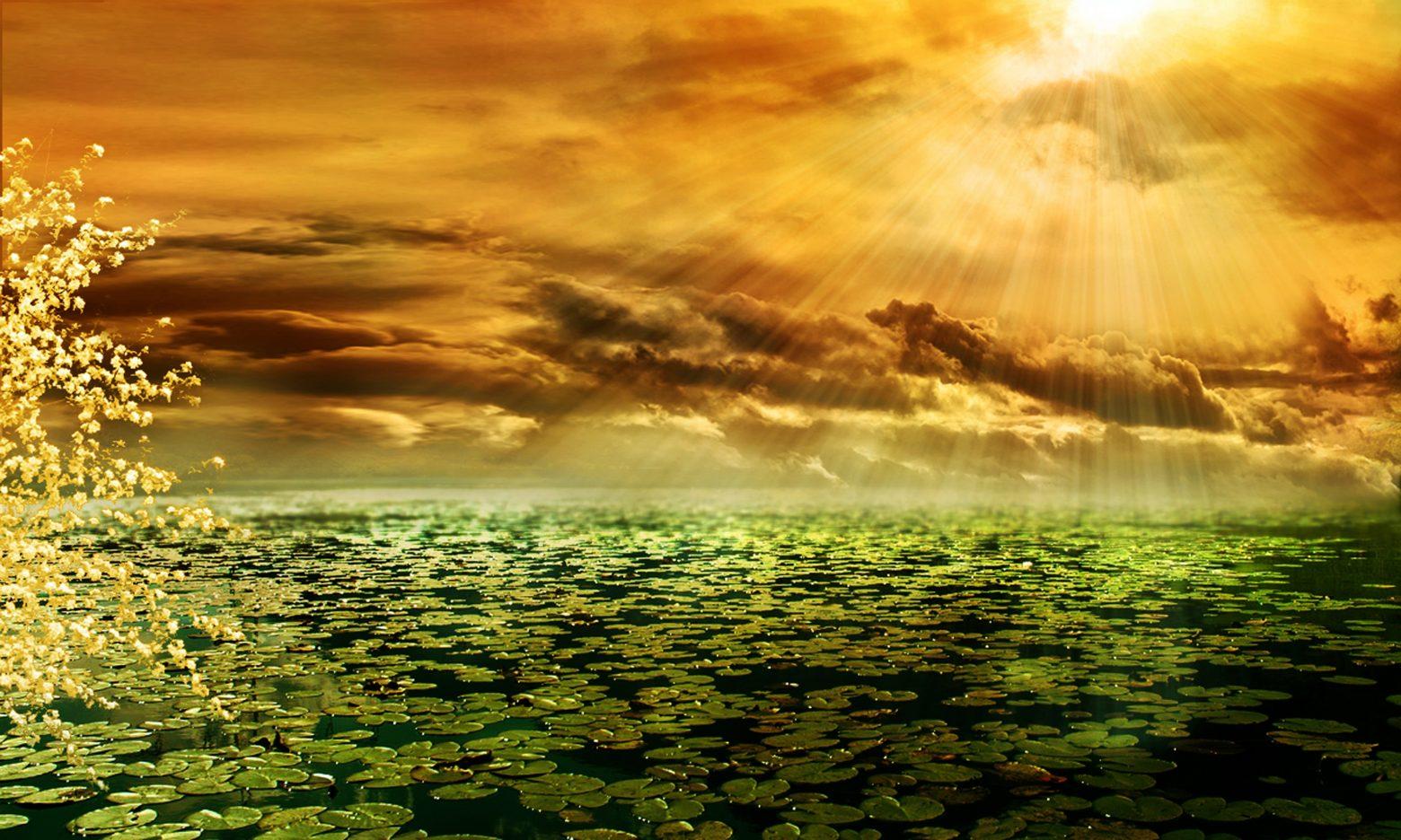 sunbeam-292987