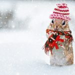 winter-2926825