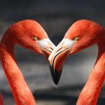 flamingo-600205