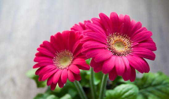 flower-631765