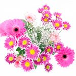 flowers-163716