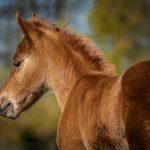 foal-2952004