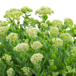 green-plant-2698183