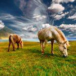 horses-2427513