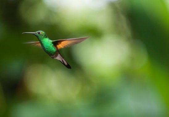 hummingbird-2139278