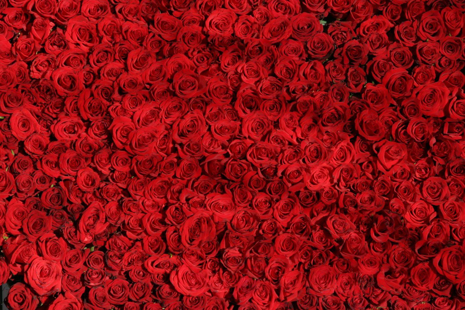 rose-374318