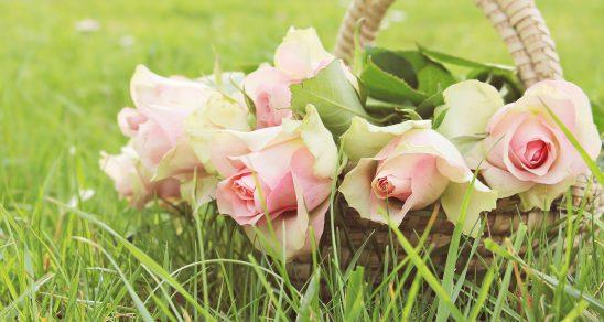 roses-2200770