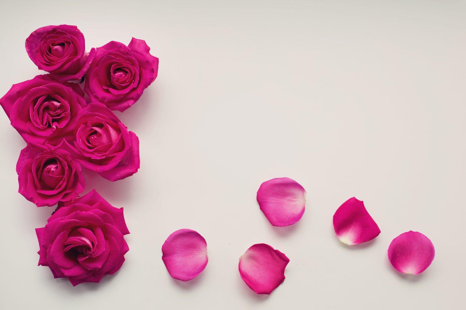 roses-2249400