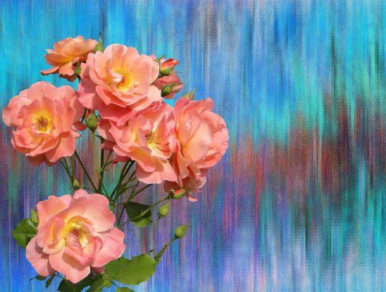 roses-2912612