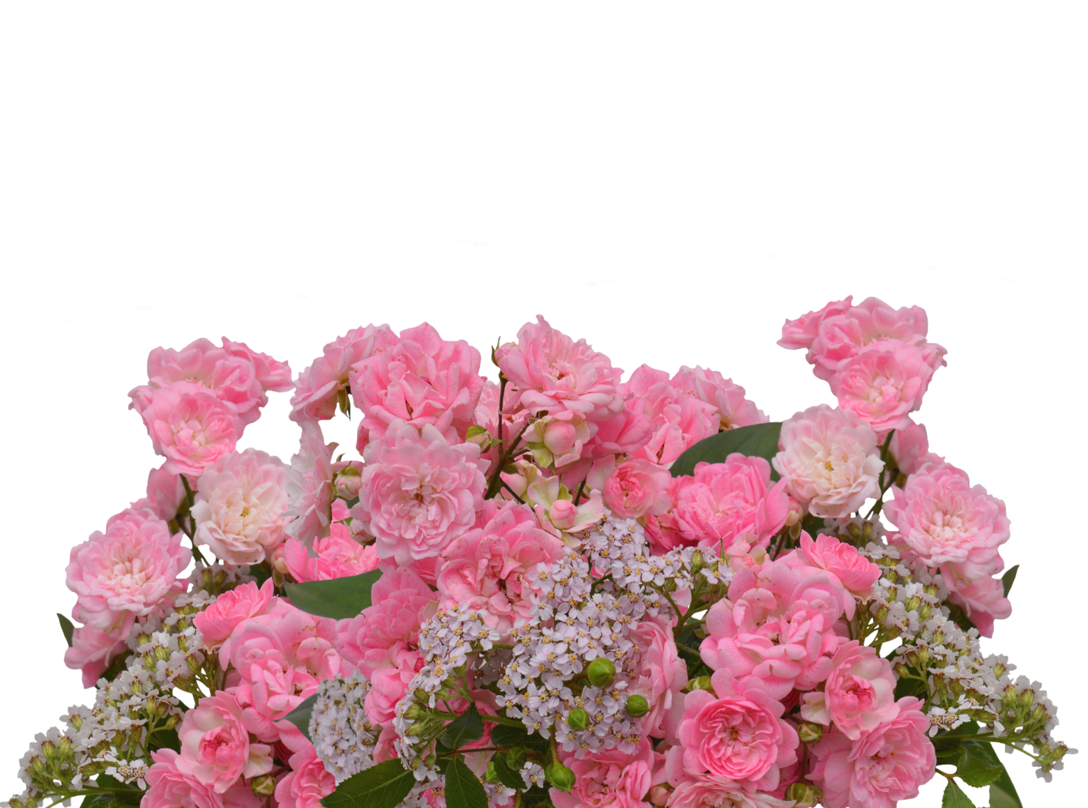 roses-2958735