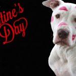 valentines-day-2034190