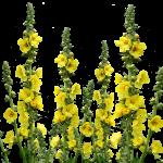 wild-flowers-2678358