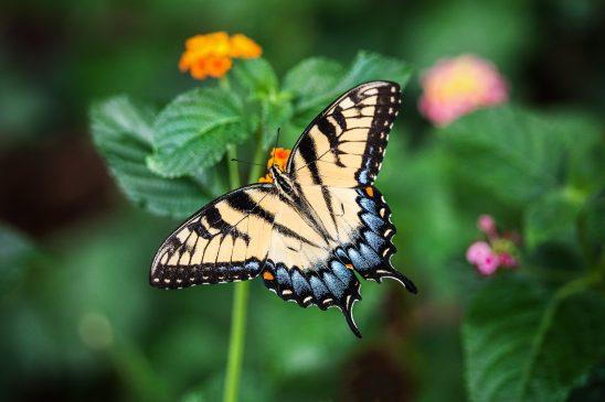 butterfly-1391809