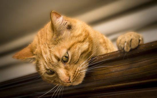 cat-2184682