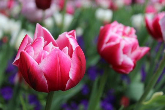 flower-2984757
