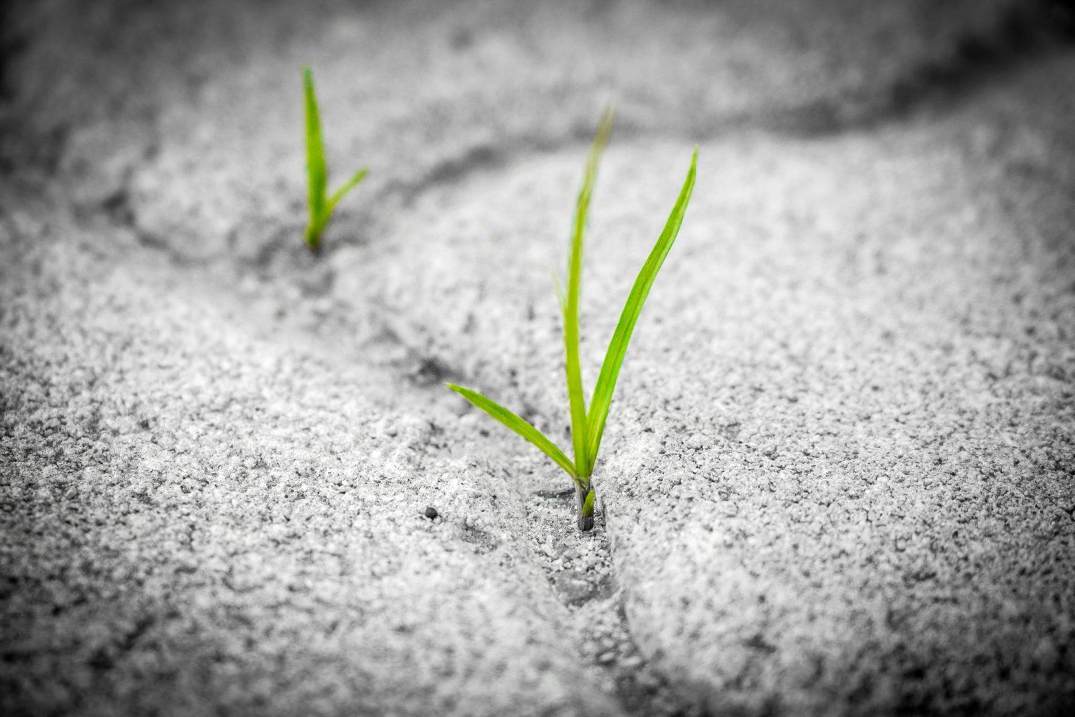 grass-1913167
