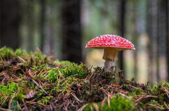 mushroom-3051519