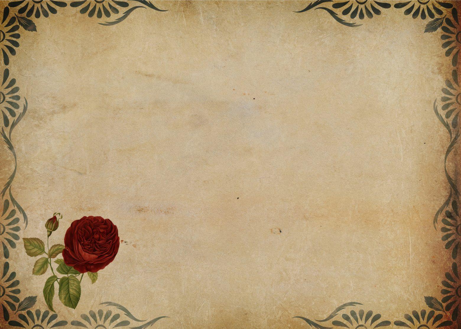 rose-2817134