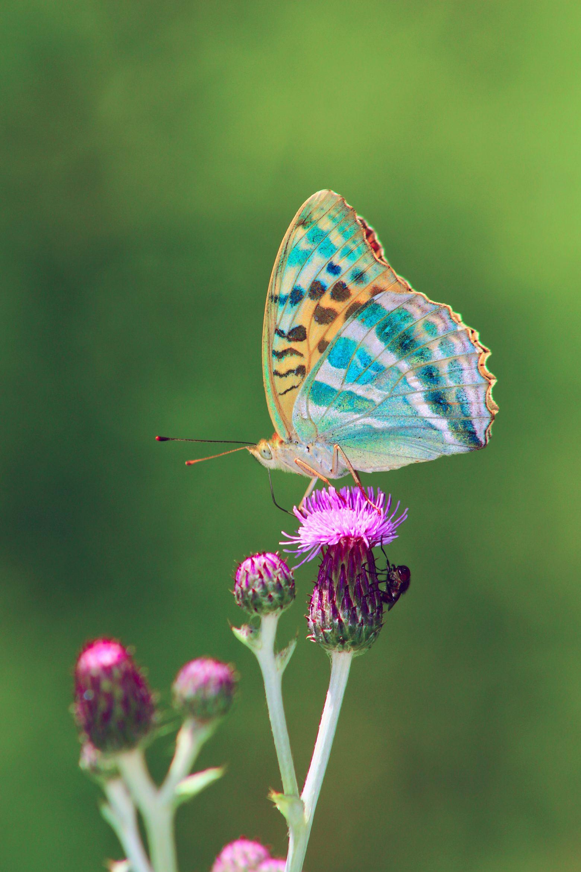 butterfly-2648583