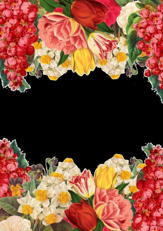 flower-3040585
