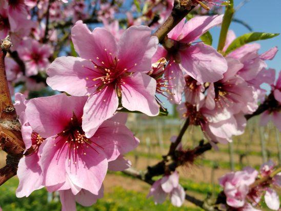 flower-3167499
