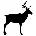 reindeer-2690234